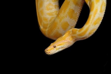 Python - Grundlagen